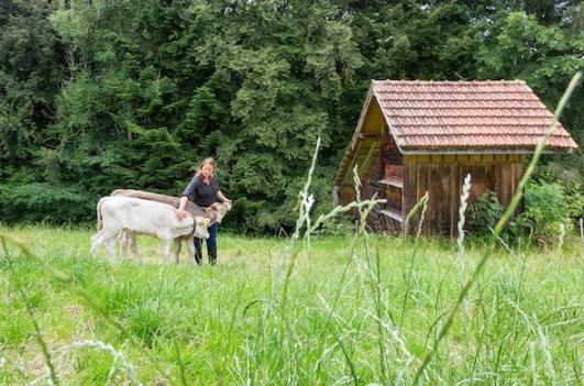 Hof Widenwad in der Natur Wiese mit Kalb